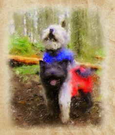 A photo-paint version of Pumi dogs, Sofi (below) and Yogi, in the field.     Rare dog breeds...more information on rare dogs...  http://doggytidbits.blogspot.com