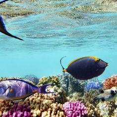 Hurghada ist nicht nur das perfekte Reiseziel für deinen nächsten Badeurlaub, sondern erfreut sich auch bei Tauchfreunden einer großen Beliebtheit. …