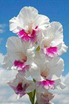 Flower Petals Art Deco Flowers, All Flowers, Exotic Flowers, Amazing Flowers, Beautiful Flowers, Gladiolus Flower, Flower Petals, Dahlia, Trees To Plant