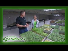 (15) Microgreens - A Basement Farm | Volunteer Gardener - YouTube