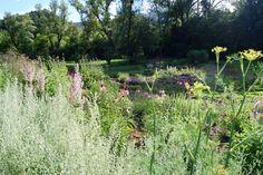 Artemisia and Foeniculum in Jardin des Simples Bellegarde en Diois Foeniculum Vulgare, Salvia, Medicinal Plants, Simple, Vineyard, Outdoor, Gardens, Outdoors, Sage