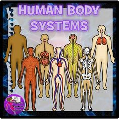 Human Body Systems Clip Art Get your hands on this set of realistic human body systems clip art, perfect for your Science resources! This set includes 6 types of systems and each comes in 3 skin tone shades.