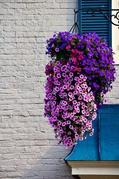 How to Keep Petunias Beautiful in a Hanging Basket ~ Garden Down South Hanging Basket Garden, Hanging Plants Outdoor, Plants For Hanging Baskets, Outdoor Pots, Plant Basket, Hanging Flowers, Hanging Planters, Indoor Plants, Petunia Hanging Baskets