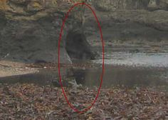 real ghost photos December 2013 | Real Ghost Pictures: Haunting On The Beach | Paranormal 360
