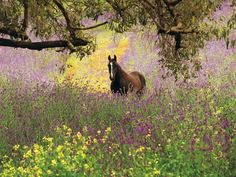 size: Photographic Print: Thoroughbred Horse among Wildflowers in the Chittering Valley, Western Australia by Peter Walton Photography : Baby Horses, Cute Horses, Wildlife Photography, Animal Photography, Western Riding, Thoroughbred Horse, Beach Landscape, Western Australia, Unique Art