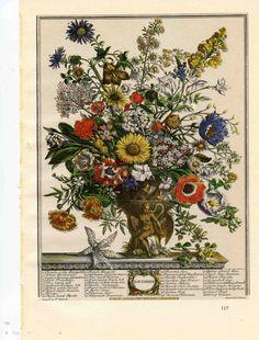1730 November Botanical Illustration - Blooming Flower Arrangement Print FURBER CASTEELS -Unframed Floral Art- baby wedding anniversary gift