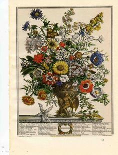 Vintage botanical print featuring November Flowers from Robert Furber's 'Twelve Month of Flowers' seed catalog in the 1700s, Unique gift for a November wedding or anniversary or for a baby born in November.