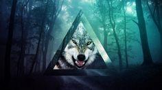 triangle and wolf ile ilgili görsel sonucu