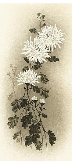 flower crysanth. asian-Free to use | Flickr - Photo Sharing!