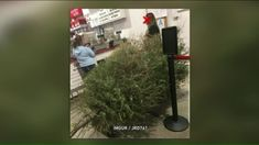 Woman Reportedly Returns Dead Christmas Tree to Costco, Gets Full Refund [Video]