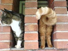 Perfectly timed photos cats