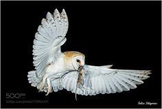De caza con exito by felidigoras #animals #animal #pet #pets #animales #animallovers #photooftheday #amazing #picoftheday