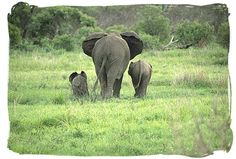 Elephant family - Stunning South Africa Safaris and South African Safari Tours