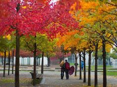 Fall colors: Tourists walk under colorful trees in Berlin, Germany
