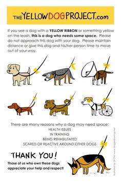 yellow dog project - if a dog is wearing yellow on the leash, give that dog some space, and don't approach with your dog. Repin to spread the word.