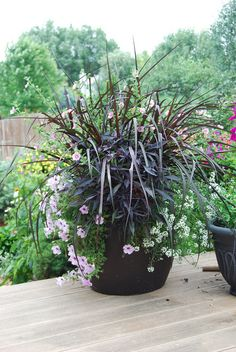 Vertigo Grass, Anisodontea - Slightly Strawberry, Snow Princess lobularia, Silver petunias.