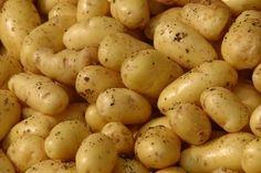 Potato Vs. Grains and Phytic Acid