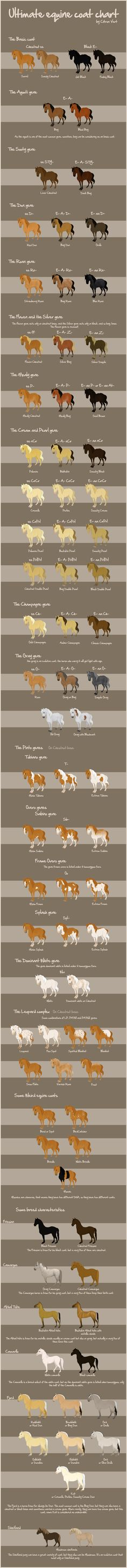 It's called the Ultimate Equine Genetics Chart... it has some errors but is pretty good.