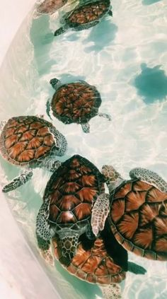 # tortugas - # - cute animals - Home Tier Wallpaper, Dog Wallpaper, Cute Baby Animals, Animals And Pets, Funny Animals, Animals Planet, Cute Creatures, Beautiful Creatures, Tortoises