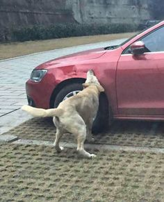 A Guy Kicked a Stray Dog, So the Dog Rounded Up Some Friends to Help Trash the Dude's Car