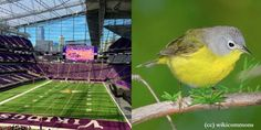 The glass on the exterior of the Vikings' new stadium is confusing & killing birds at a massive rate. Urge a simple fix now! (25819 signatures on petition)