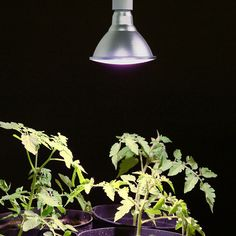 belysning för växter inomhus