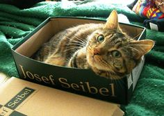 """""""A cat is a puzzle for which there is no solution."""" --Hazel Nicholson  #catsinbox"""