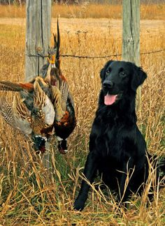 Hunting. In this case you should be proud of the dog who showed u wear these birds were.