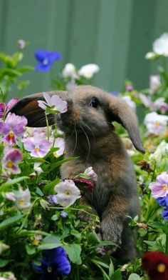 Garden bunny. Rabbit in pansies.