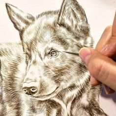"""Wolf painting in progress 9"""" x 12"""" detail sepia watercolor on board Rebecca…"""