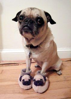 http://stylefas.blogspot.com - pug slippers