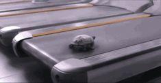 Даже у черепашки есть беговая дорожка!