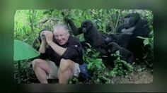 Touched by a Gorilla Mountain Gorilla, Uganda, Safari, Acting, National Parks, Wildlife, Touch, Trail, Group