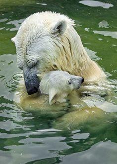 Polar Bear Love Family