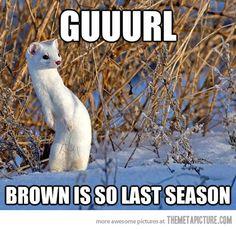 Funny Ferrets   funny-ferret-white-snow