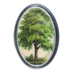 Discovered our backyard shade tree is a Linden Tree (paper weight by John Derian Company Inc)