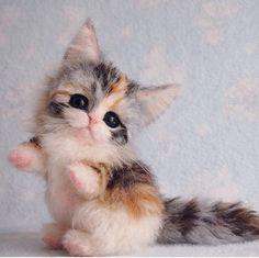 . #kitten #felt