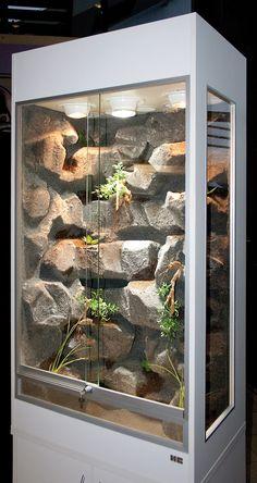 Terrarium für Felswand oder Trockenmauern bewohnende Reptilien