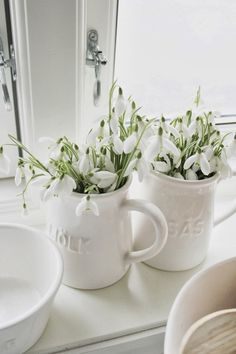 Snow drops in white mugs