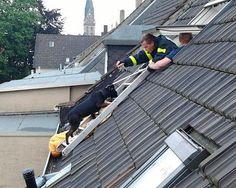 Mit einer Leiter zog die Feuerwehr zurück die in die Wohnung.  Foto: Feuerwehr Bochum