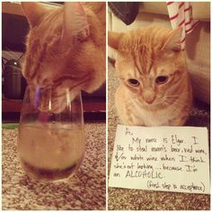 hahahah cat shaming