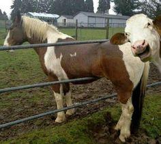 33 Extreem grappige gifjes van trollende dieren - FHM.nl