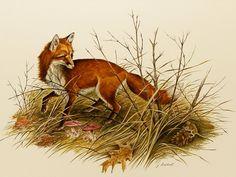 Fox Art Print w/Mat (Rustic Decor, Cottage Wall Art) Matted Vintage Animal Art…