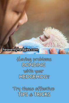 This hedgehog owner is doing one thing wrong and one thing right. Hedgehog Bath, Pygmy Hedgehog, Cute Hedgehog, Hedgehog Habitat, Hedgehog Supplies, Homemade Cat Toys, Guinea Pig Toys, Boxing Training, Reptile Cage