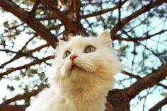 White cat!