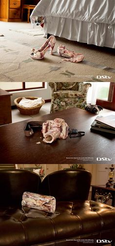DStv (Nat Geo Wild): Shoes Because your dog sees the world a little differently. Catch Cesar Millan Sundays at 18:00. Nat Geo Wild | Channel 182. Advertising Agency: Ogilvy & Mather, Johannesburg, South Africa #ads #ogilvy #pets #brilliant