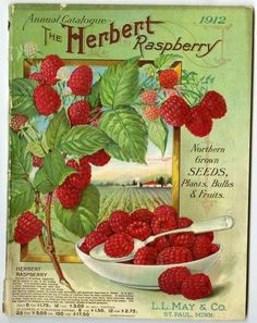 Mouthwateringly Beautiful Plump Red Raspberries Adorn The Cover Of 1912 L May Retail Catalog