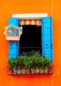 Windows, Bright, vibrant complimentary colours of orange and blue. Even the birds and mosaic planters match!