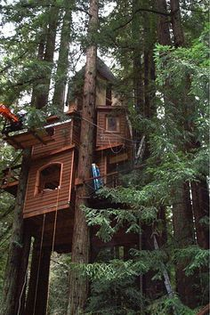 I would love an awesome tree house. Amazing Snaps: Home in tree top Beautiful Tree Houses, Cool Tree Houses, Zelt Camping, Tree House Designs, Tree Tops, In The Tree, Green Life, Play Houses, My Dream Home