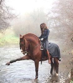 La imagen puede contener: caballo y exterior Cute Horses, Pretty Horses, Horse Love, Horse Girl, Beautiful Horses, Animals Beautiful, Andalusian Horse, Horse Training, Equine Photography
